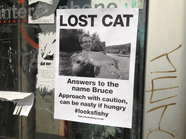 Lost Cat Poster