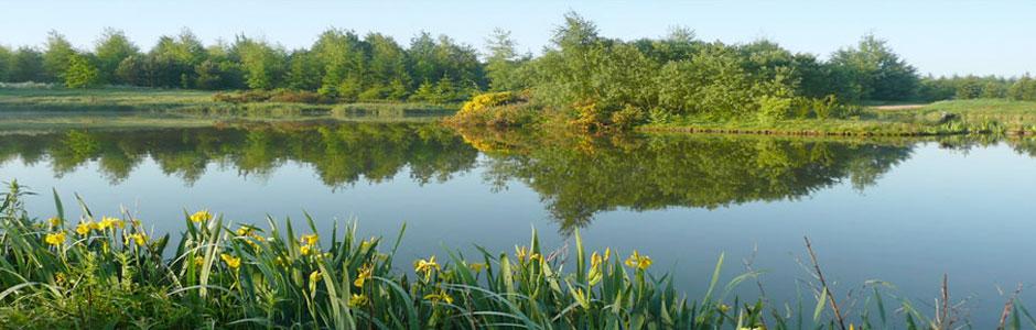 Beehive Woodland Lakes