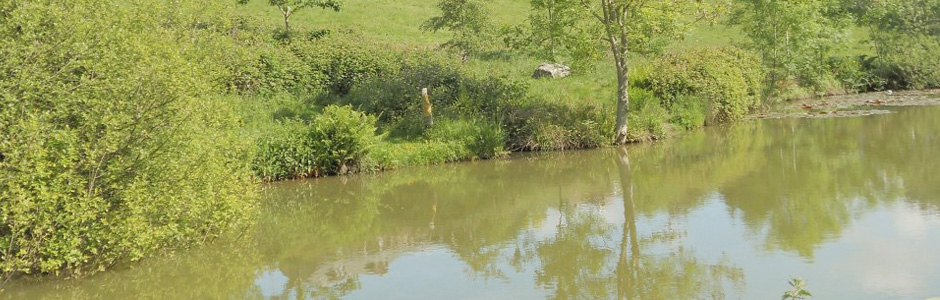 Higham Farm Fishery