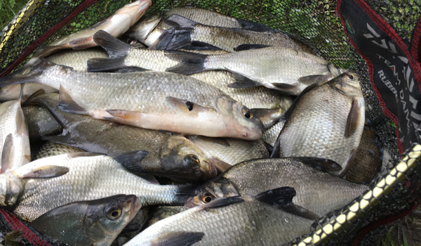 A bag of skimmers from Moira Canal