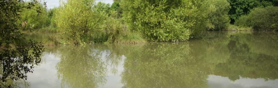 Eden Meadows Fishery
