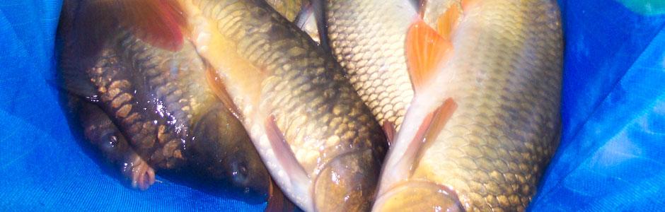 Chequertree Fishery