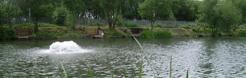 Springview Fisheries