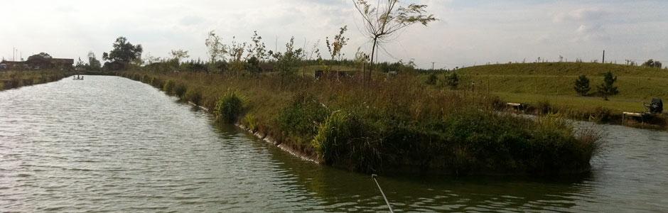 Westwood Lakes