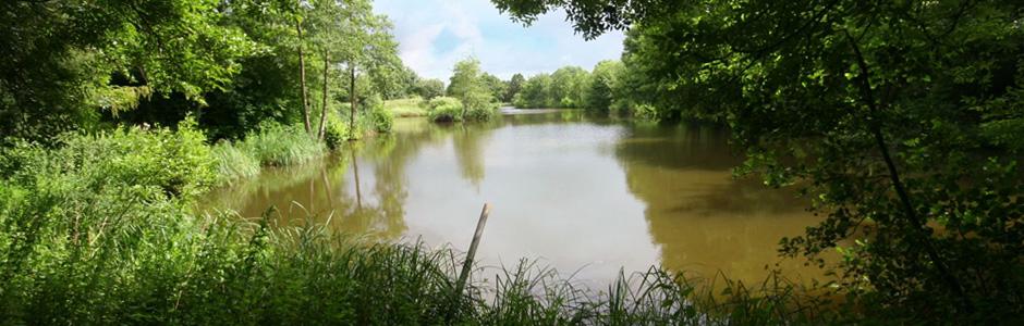 Wood Rising Carp Lake