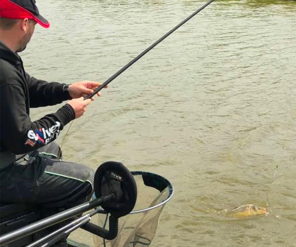 shallow caught carp