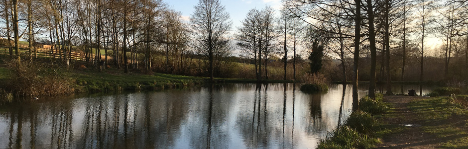 Yew Tree Ponds / Fry's